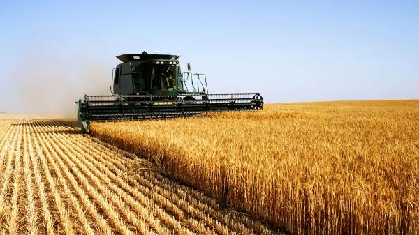 32 de firme din agricultură, în Top 500 cele mai puternice afaceri din România